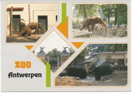 Eléphant Multivue - Éléphants