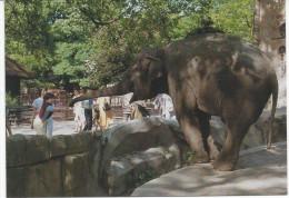Eléphant - Éléphants