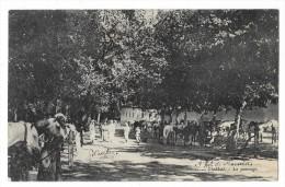 Cpa: ALGERIE - CHABBAT - Le Pansage (Chevaux) 1911 N° 1 - Autres Villes