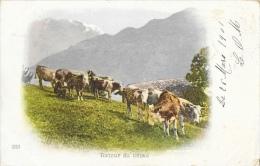 Suisse - Le Retour Du Bétail Dans L'alpage - Carte Précurseur N°213 - Allevamenti