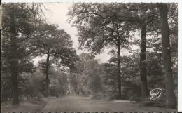 CPSM - Mainville - Forêt Du Sénart -Sous Bois - France