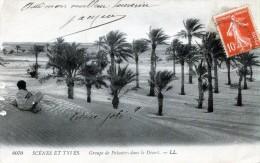Scenes Et Types. Groupe De Palmiers Dans Le Désert - Algeria