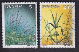 Rwanda: Plantes Médicinales 1276. 1278 - Rwanda