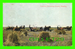 AGRICULTURE - REAPING - HARVESTING IN THE GREAT WHEAT FIELDS OF MANITOBA - TRAVEL IN 1908 - THE VALENTINE & SONS - - Cultures