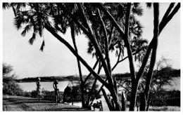 NIGER - NIAMEY -- Les Bords Du Niger - Niger