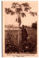NIGER - Un Papayer. - Niger
