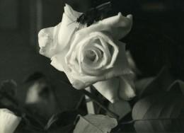 Portugal Guimaraes Etude Photographique Fleur Et Mouche Gros Plan Ancienne Photo Azevedo 1950 - Foto's