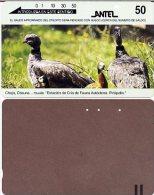 @+ TC D´Uruguay - Faune - Chaja - Uruguay