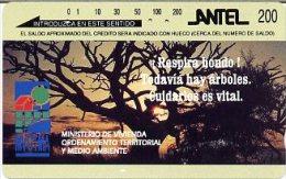 @+ TC D´Uruguay - Mvotma - Arbre - Uruguay