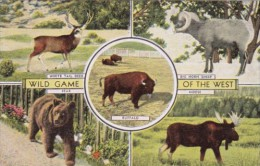 Wild Game Of The West Bear Moose White Tail Deer &amp  Big Horn