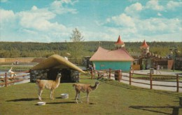 Canada Llamas The Children's Zoo Storyland Valley Edmonton Alberta - Edmonton