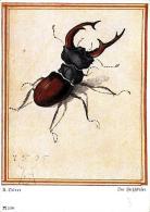 [DC2628] CPA - CERVO VOLANTE - COLEOTTRI - Non Viaggiata - Old Postcard - Insectos