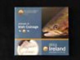 Irlande 2011 : Coffret BU Des 8 Pièces - Irlanda