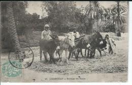 LAGHOUAT ALGER - Battage Du Grain ( Personnages , ânes ) - Professions