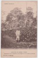 Jardin Colonial  --  Plantation De Caféiers D Arabie - Cultivation
