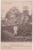 Jardin Colonial  --  Plantation De Caféiers D Arabie - Landbouw