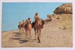 CAMEL CARAVAN, 1979 With Bahrain 150 Fils Stamp - Bahrain