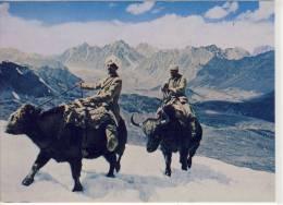 AFGHANISTAN - Yaks In Pamir - Afghanistan