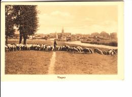 MOSELLE - MAGNY - Berger Et Troupeau De Moutons - Francia
