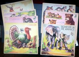 DECOUPAGES CARTONS  LOT DE 12 PLANCHES ANCIENNES A DECOUPER ET A MONTER AUTOMOBILES  ANIMAUX  ANE ELEPHANT - Collections