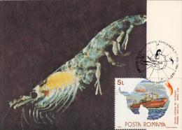 ANTARCTIC WILDLIFE, CRUSTACEAN, PENGUIN, SEAL, SHIP, CM, MAXICARD, CARTES MAXIMUM, 1990, ROMANIA - Antarctic Wildlife