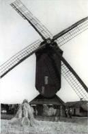 LUMMEN (Limburg) - Molen/moulin/mill - De Gewezen Houten Standaardmolen Van Lummen Omstreeks 1930 - Lummen