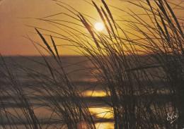 40   ?---Coucher De Soleil Sur La Côte Atlantique A Travers Les Joncs----voir 2 Scans - Non Classés