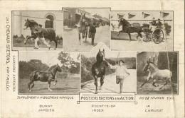 CHEVAUX POSTIERS BRETONS EN ACTION 1914 - Chevaux