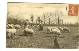 Scènes De La Vie Normande, Couple Avec Chien Gardant Le Troupeau De Moutons En 1907 - Timbre Recto Semeuse Camée 10c - Basse-Normandie