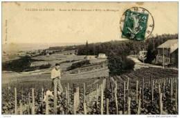 51 Villers-Allerand .Route De....à Rilly -la-Montagne.(Vignes Vin De Champagne). - Francia