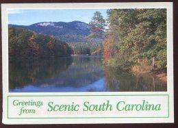CPM Etats Unis Greetings From Scenic South Carolina - Etats-Unis