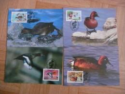 WWF Azerbaidjan Azerbaijan Aserbaidschan Ferruginous Ducks Moorente  2000 4 CM MK MC Maxi Maximum Card Carte Maxicard - Maximum Cards