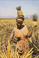 SWAZILAND, A Pineapple Picker In The Malkerns Valley, 2 Scans - Swaziland