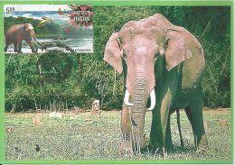 Maximum Card India  2007 Periyar National Park,Elephant,Wildlife, Maxim Card - Elefanten