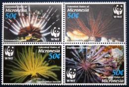 Micronesia 2005 - Faune Marine, Wwf  - 4 Val Neuf // Mnh - Micronesia