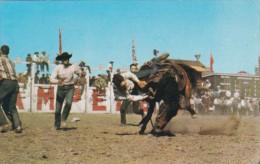 Canada Bucking Horse Contest Calgary Stampede Calgary Alberta