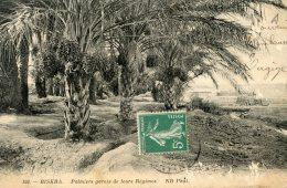 B21979 Biskra, Palmiers Garnis De Leurs Régimes - Biskra