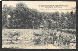 CASTILLON Sur DORDOGNE Rare Pépiniériste Léo FOURNIER (Zappatereau) Gironde (33) - Altri Comuni