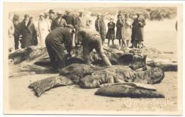 Blankenberghe - 24-VI-1931 - Baleine - Walvis - Photo Card - Blankenberge