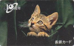 Télécarte Japon - ANIMAL - CHAT - CAT Japan Phonecard - KATZE Telefonkarte - GATO  - KAT - 2694 - Gatos