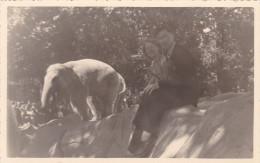 Oude Foto / Postkaart 1951 Antwerpen Olifant Dierentuin Zoo Jardin Zoologique Tiergarten Anvers - Antwerpen