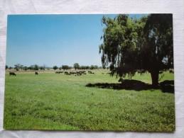 Australia Harvey Agricultural Land 11 Km From Bunbury  A100 - Bunbury