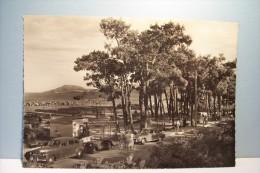 ARGELES Sur MER   --- Le Golf Miniature Et Les Pins   - ( Format 150x105 )  - ( Pas De Reflet Sur L´original ) - Argeles Sur Mer