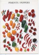 Piments Pippers Peperoni - Mayer 1998(atelier Nouvellles Images) Gastronomie Légumes - Heilpflanzen