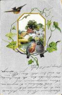 [DC2679] CPA - UCCELLINI SUI RAMI - SFONDO ARGENTATO IN RILIEVO AL TATTO - Non Viaggiata 1902 - Old Postcard - Uccelli