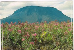O2586 The Mountain Herdubreid In North Eastern Iceland / Viaggiata 1990 - Islanda
