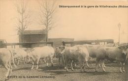 BOEUFS DE LA CARNINE LEFRANCQ DEBARQUEMENT A LA GARE DE VILLEFRANCHE - Elevage