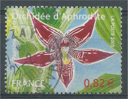 France, Flower : Mabel Sanders Orchid, Paphiopedilum, 2005, VFU - France