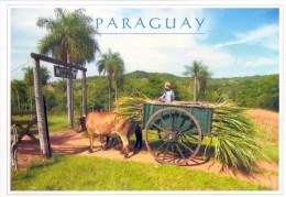 POSTAL PARAGUAY - CARRETA ESTIRADA POR BUEYES - Paraguay