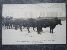 Race Maine-Anjou  -  Concours Général De Paris 1925  -  Lot De Sept Taureaux - Elevage